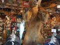 Grizzleys store in Anchgorage DSC08266
