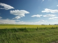 Alberta Plains