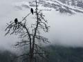 Birds in Trees Near Ice Fields