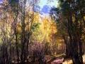 Fall Sierras Bridge Trees
