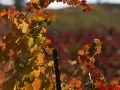 Central Coast Wine Country in Fall