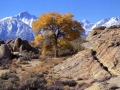 Mt Whitney Behind Tree Fall