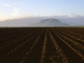 Oxnard Field To Mountains At Sunrise