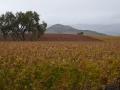 San Luis Obispo Wine Country