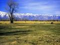Sierras Horse Pasture Winter