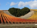 Paso Robles Vinyard with a Heart