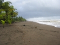 Caribbean Shoreline - zcosta ricaIMG_6139