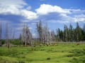 Elk Herd Yellowstone