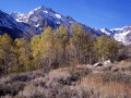 Rocky Mountains And Aspens
