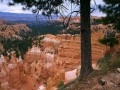 Bryce Canyon Tree Squirl