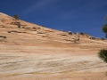 Zion National Park Mtn Goats