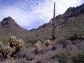 Tucson Cactus01