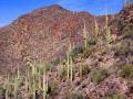 Tucson Cactus02