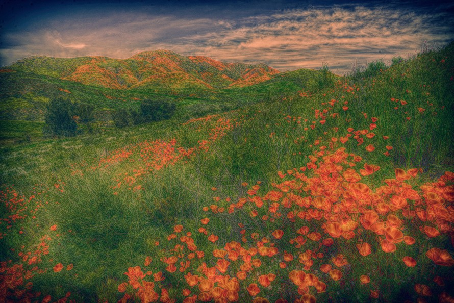 Poppies1DSC01552.jpg